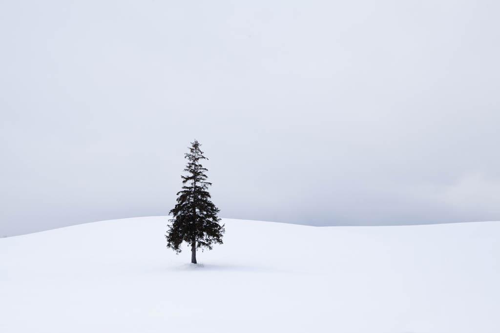 크리스마스트리나무